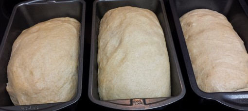 Bread Before Baking